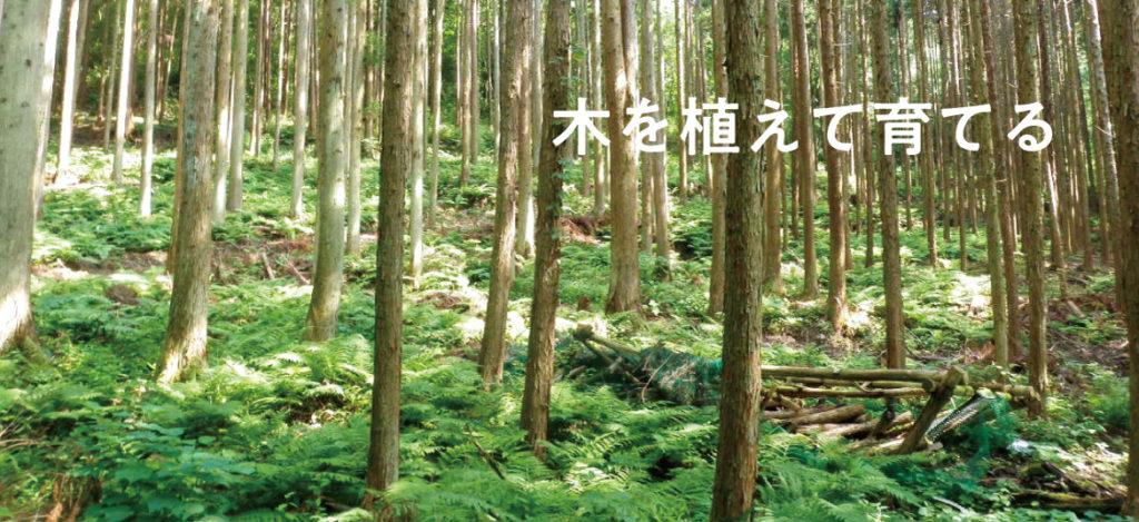 木を植えて育てる