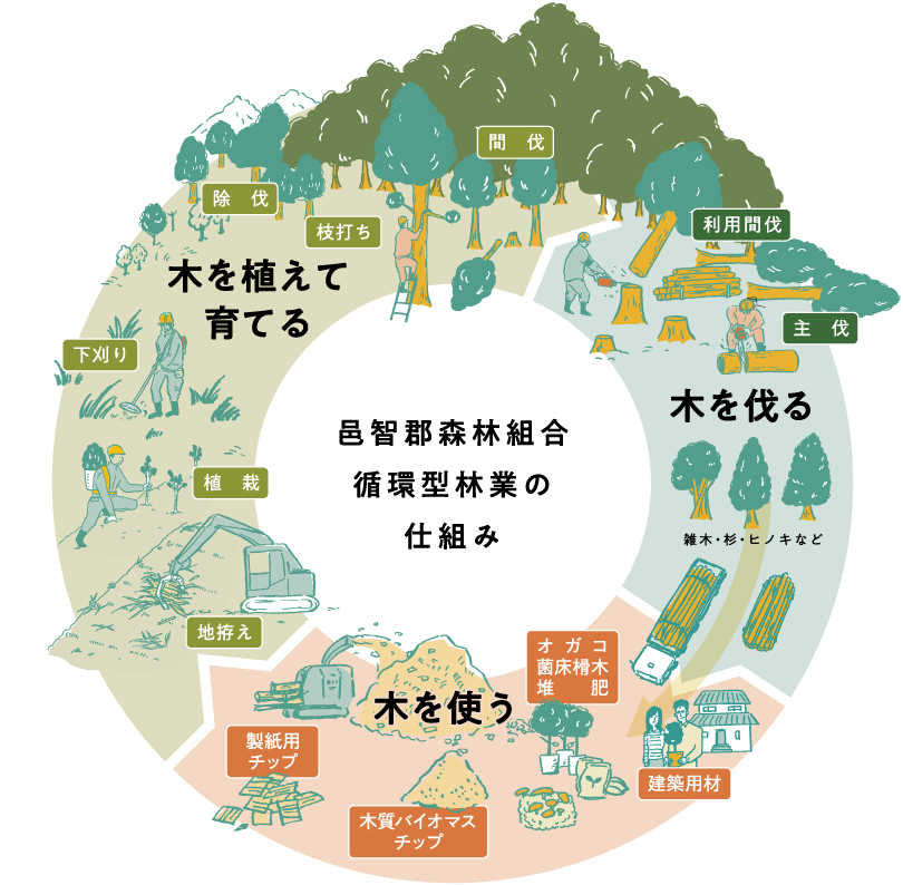 循環型林業の仕組み